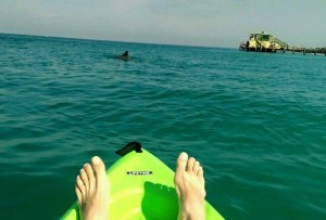 Photo of Dan's feet on a kayak, with a dolphin fin in the distance.
